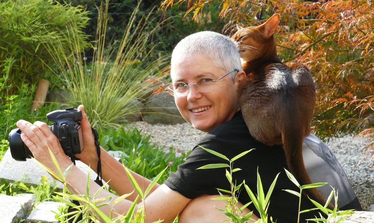 Katzenverhalten verstehen |Seminar mit Sabine Schroll im Mai