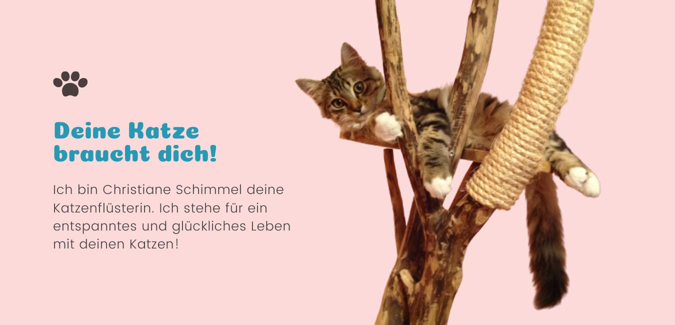 Deine Katze braucht dich