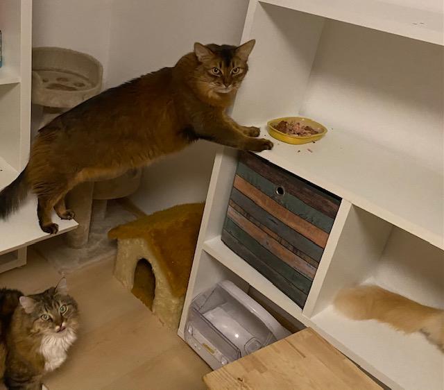 Katzen fressen ungewöhnlich