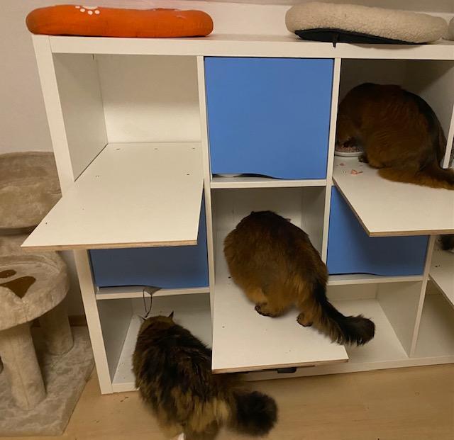 Fressen mit mehreren Katzen